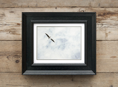 Fly High above the Sky (Seagull) Framed
