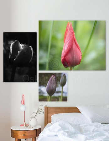 Canvas Prints Framed Aesthetic Images XII