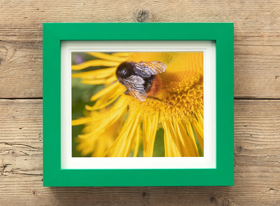 Bee And Yellow Flower III Framed