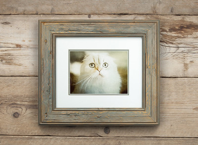 Mémoire of The Cat Framed