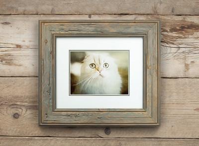 Mémoire of The Cat Framed
