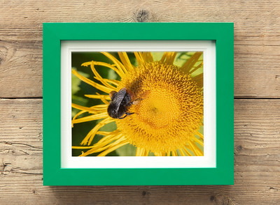 Bee And Yellow Flower Framed