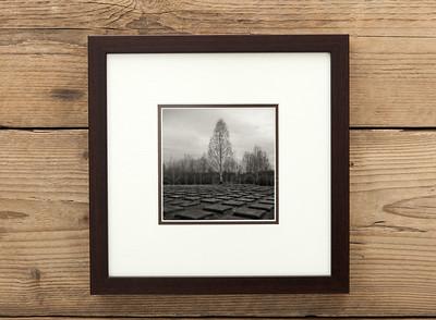 Urban Tree Framed