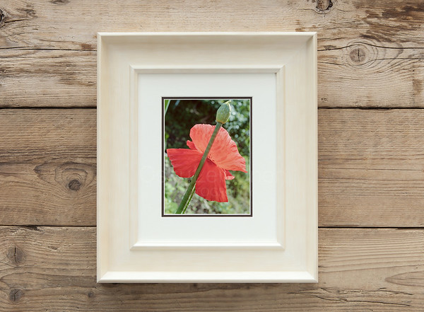 Striking Red Flower And Bud Framed