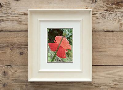 Striking Red Flower And Bud Framed