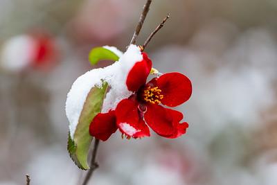 warlickphoto_flowers-5