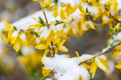 warlickphoto_flowers-10