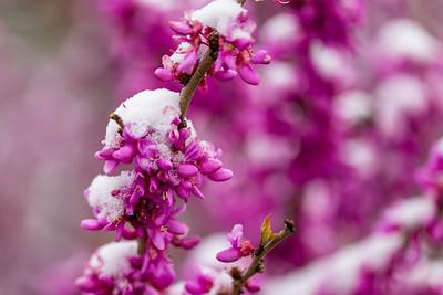 warlickphoto_flowers-8