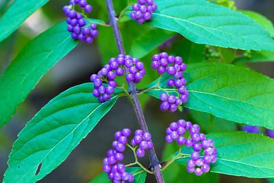 warlickphoto_flowers-20