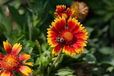 warlickphoto_flower5