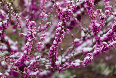 warlickphoto_flowers-7