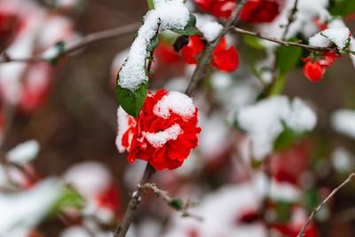 warlickphoto_flowers-1