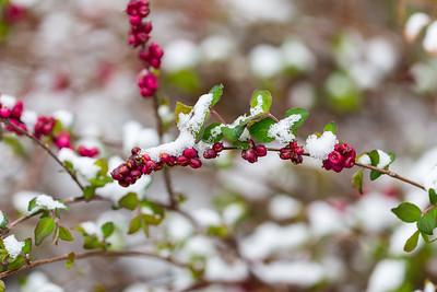 warlickphoto_flowers-4