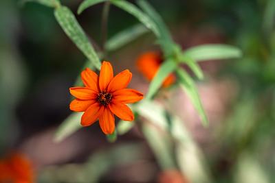 warlickphoto_flower4