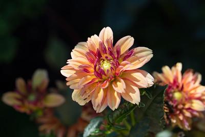 warlickphoto_flower8