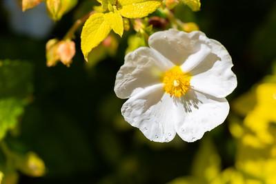 warlickphoto_flower