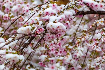 warlickphoto_flowers-6