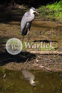 warlickphoto_animals-24