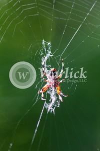warlickphoto_animals-27