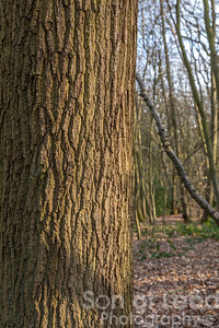 Trees in Hockley Woods - Essex