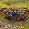 Animal Marine Life, Crab