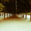Trees - Paris France