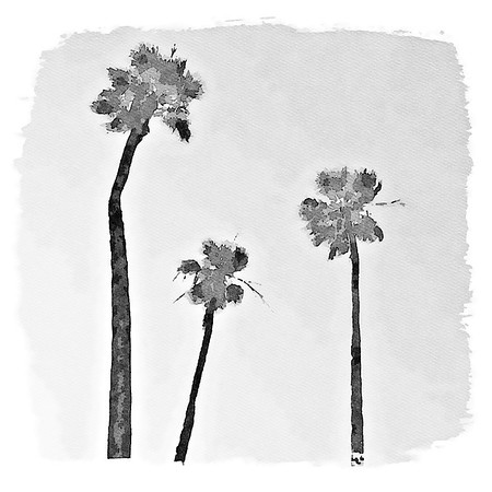 Three Palms - Laguna Beach, California