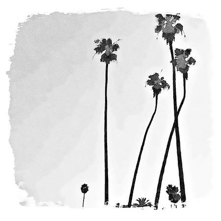 Palm Trees - Laguna Beach, California