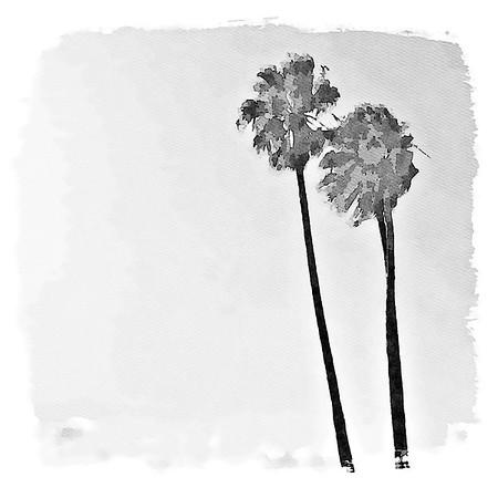 Palm Tree Paradise - Laguna Beach, California