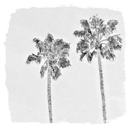 Two Palms - Laguna Beach, CA
