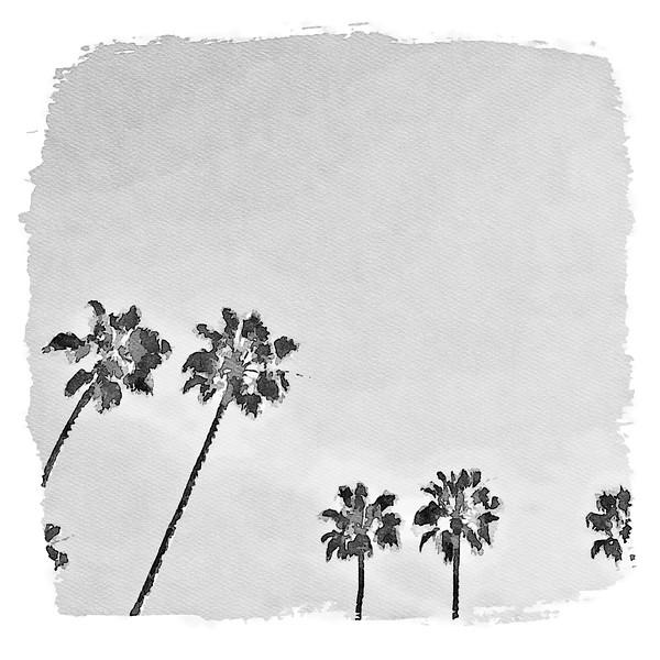 Palm Paradise - Laguna Beach, California