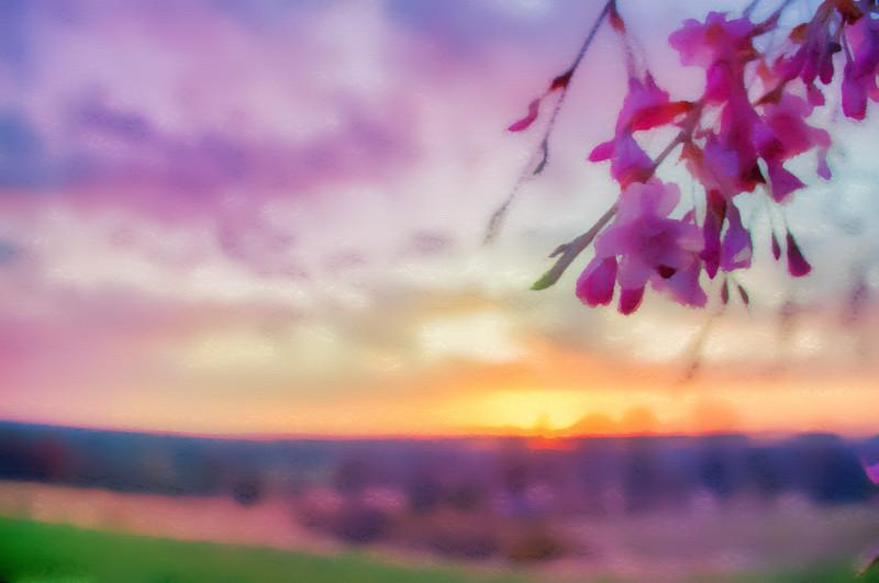 Cherry Tree Before The Sunrise
