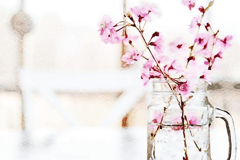 Cherry Tree Blossoms in Mason Jar