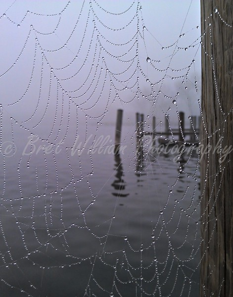 Spider Web 18x24 2012-03-24_HDR