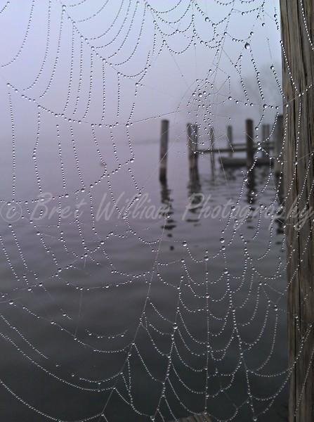Misty Morning Web 08-31-21