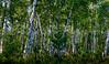 2013 Landscapes__BWP50274 MP2414x