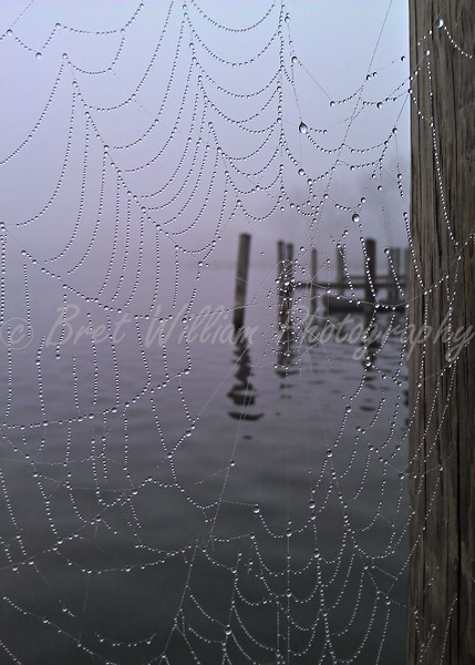 Spider Web 16x24 2012-03-24_HDR