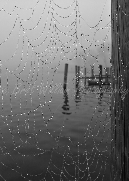 Spider Web 16x24 2012-03-24_HDR_BW