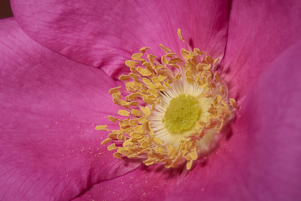 DaveHaywardPhotos-Macro-Flowers- 28