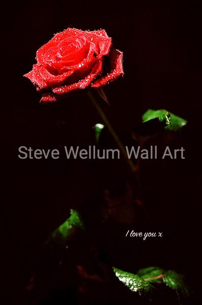 black rose love you