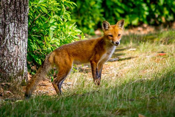 fox july 16 2019 (1 of 1)