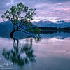 """That Tree"" at Lake Wanaka, New Zealand - sunrise looking east"