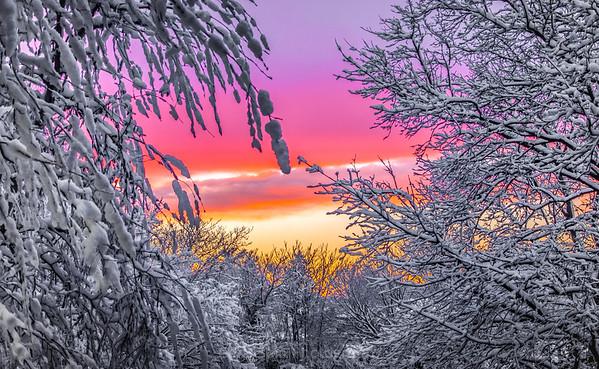 snowy trees-