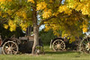 tractor with trees