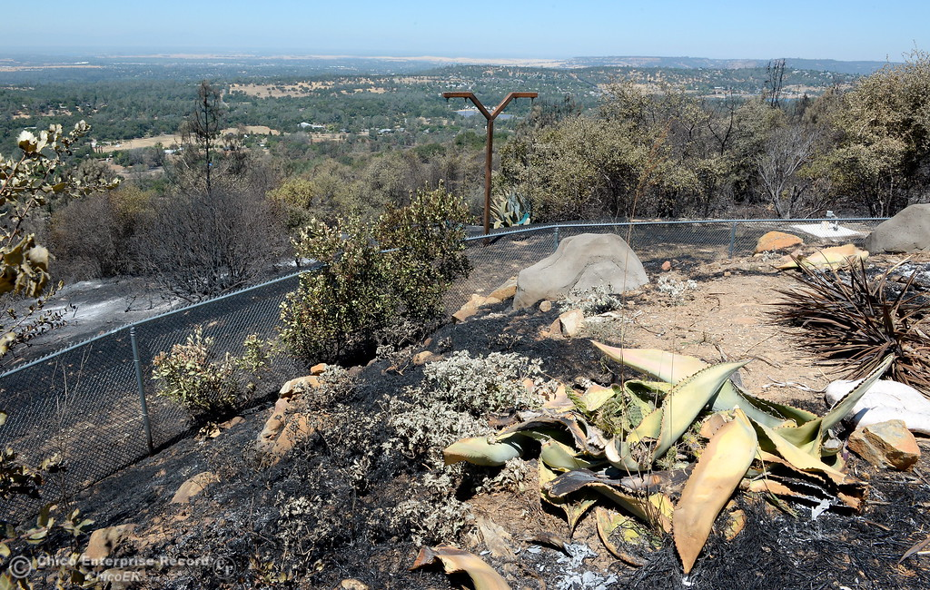 . A border of succulents appears to have helped save the Prestella Family home on Viewcrest Drive from the Wall Fire near Oroville, Calif. Mon. July 10, 2017. (Bill Husa -- Enterprise-Record)