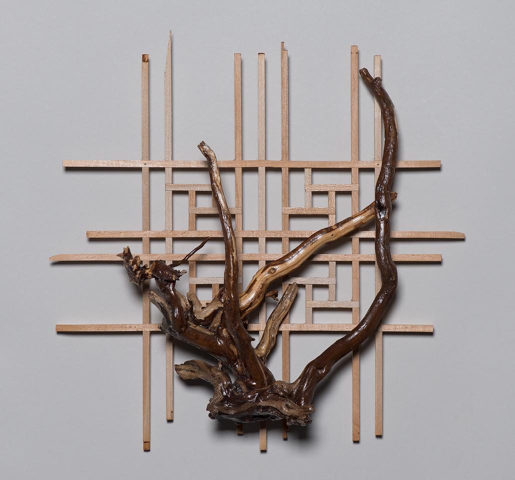 Lattice with Root