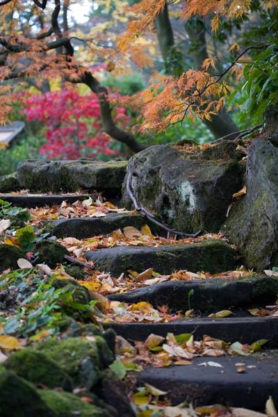 STEPS IN WOODLAND AREA, NOVEMBER, WINTERBOURNE BOTANIC GARDEN, BIRMINGHAM UNIVERSITY