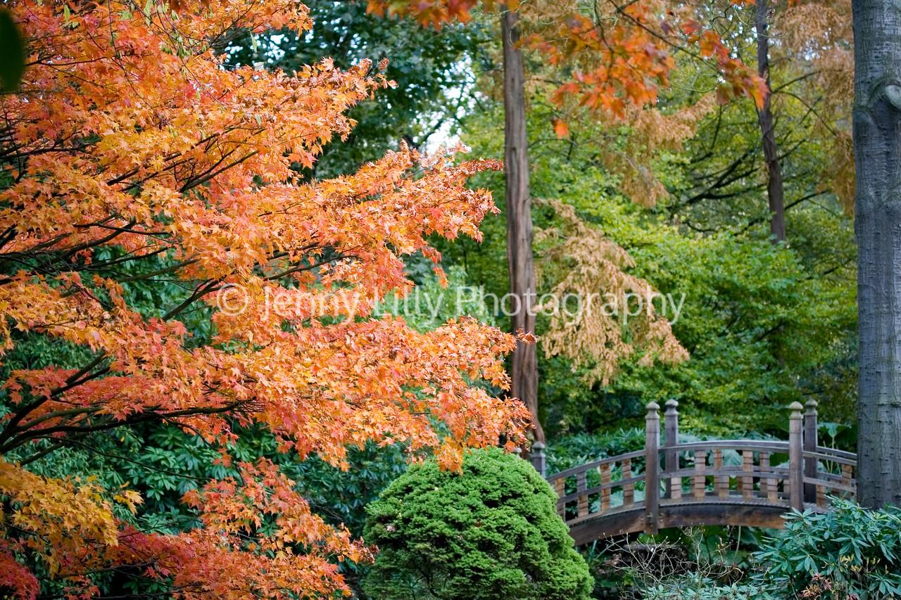 VIEW OF JAPANESE BRIDGE, WINTERBOURNE BOTANIC GARDEN, BIRMINGHAM UNIVERSITY, NOVEMBER