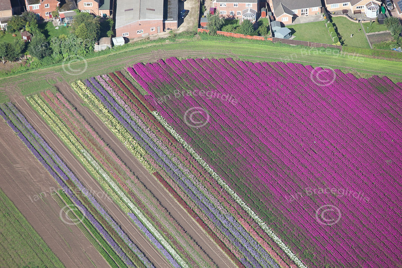 Aerial photo of the patterns in a colourful field.