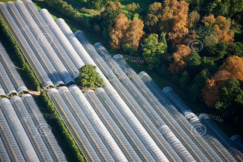 aerial photo of a tree growing through a greenhouse.